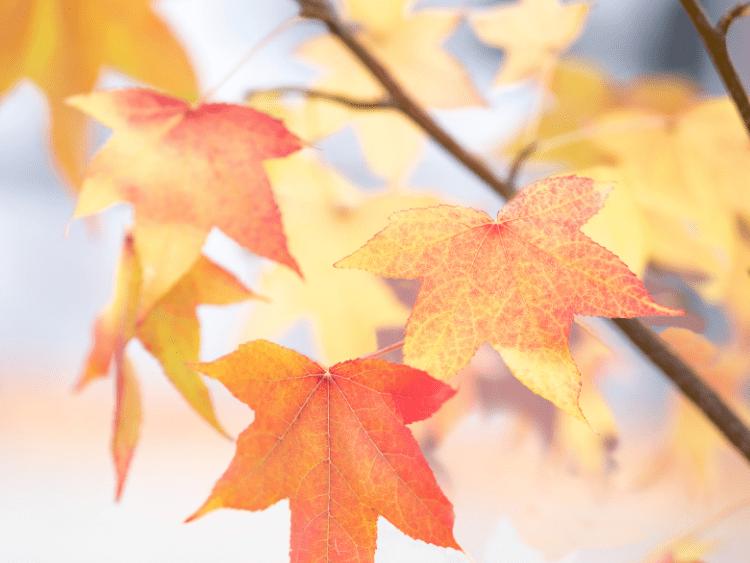 Diffuserblends voor de herfst - PURE by ME